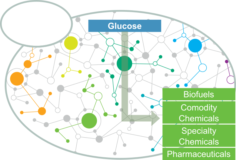 Synthetic Biology and Metabolic Engineering for Production of Different Chemicals