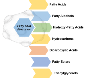 Biotechnology production of Fatty Acids, Fatty Alcohols, Hydroxy Fatty Acids, Hydrocarbons, Dicarboxylic acids, Fatty Esters and Triglycerides