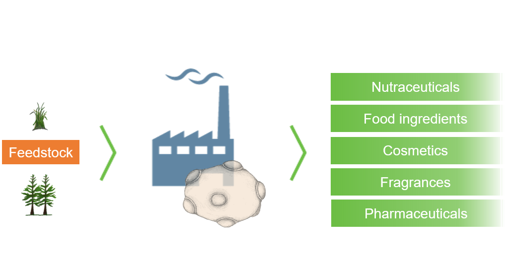 Bioengineered Yeast cells transofrm sugar feedstocks into high value products